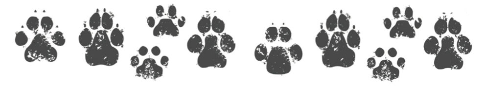 A6 flyer kennel (Paws) jpeg.jpg
