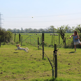Ball games in the orchard