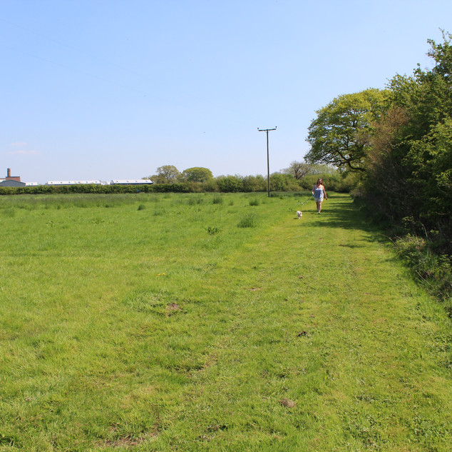 Field walk