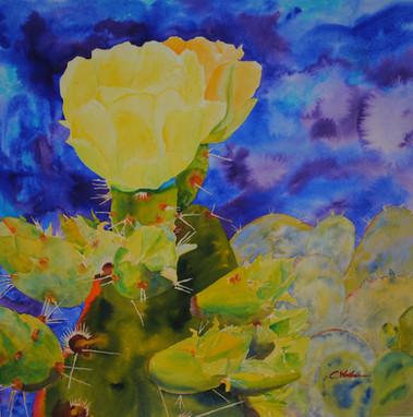 Thorny Bloom