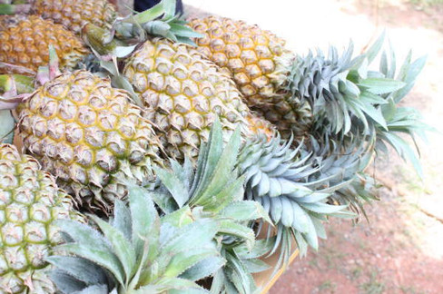 2-pineapple.jpg