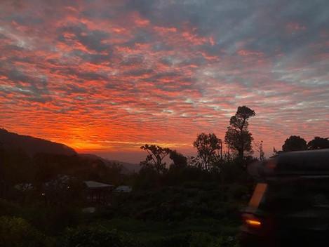 今年7月のスリランカ紅茶ツアー20名さま限定。あと2名様で満席。茶園での夕暮れ。