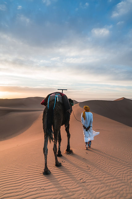 caml trek in the sahara desert south of morocco