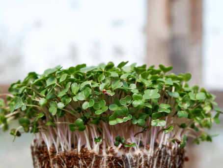 How to Make $200,000 a Year Growing Microgreens