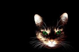 cat-606532.jpg