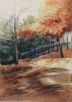 עמוקה (יער ביריה)