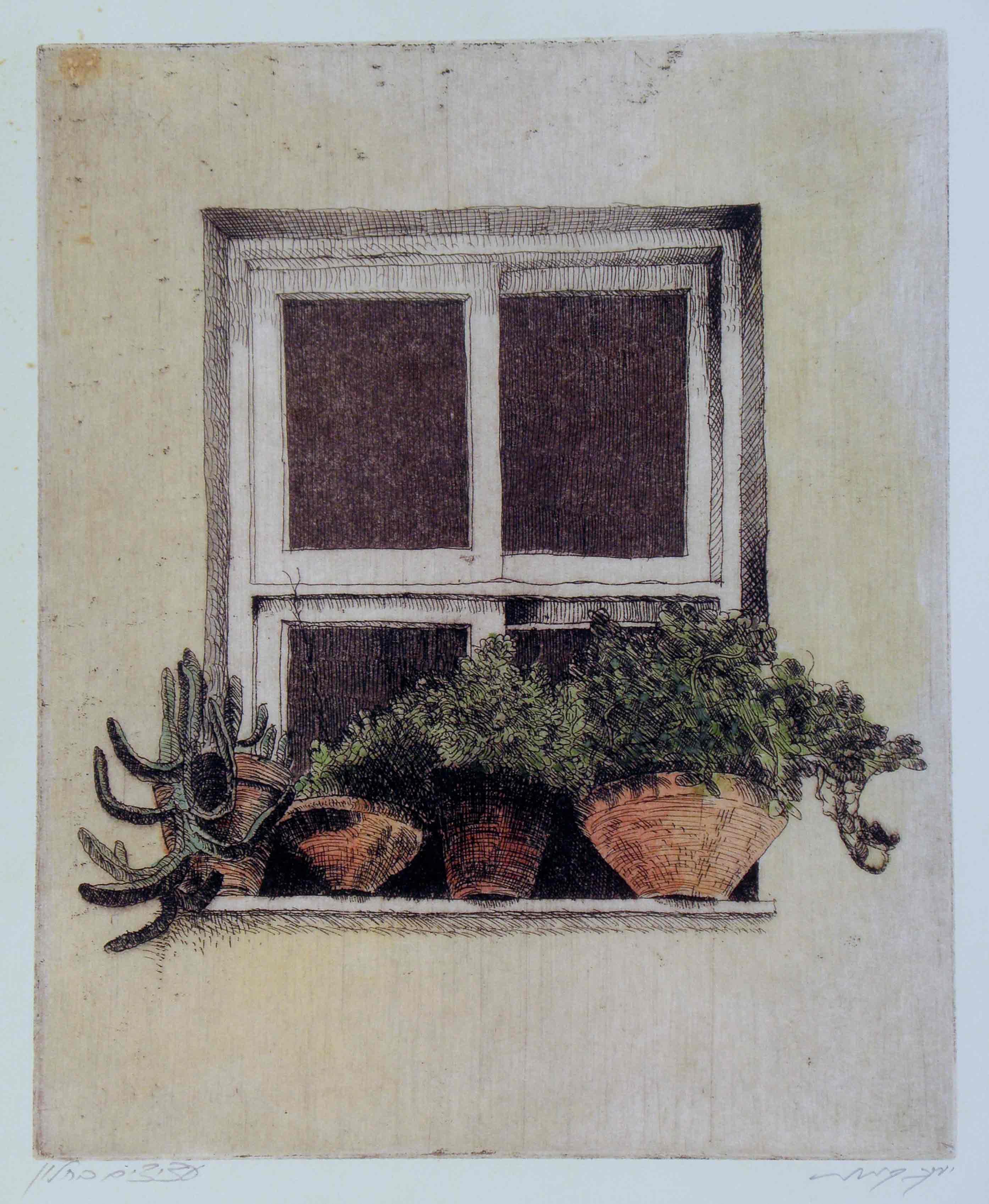 עציצים בחלון
