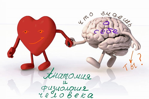 Курс «Анатомия и физиология человека», начало 1 сентября