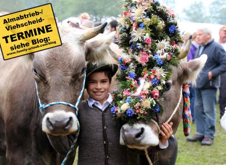 Almabtrieb der Alpenkühe im Königswinkel