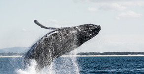The Whale Watching Season starts soon!