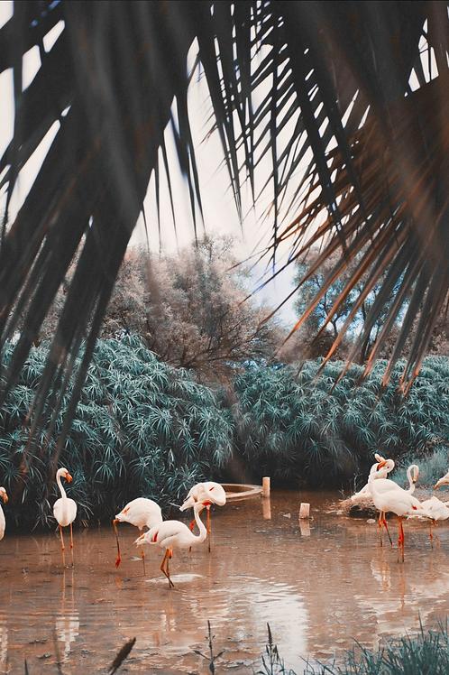 The Flamingo garden