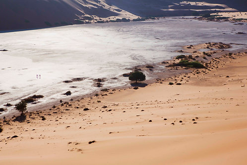 'The walking dead' Salt lake