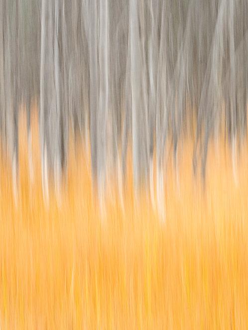 Return of the Golden Grasses