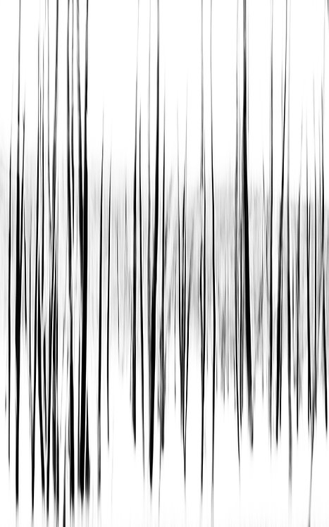 Sound Waves of the Forest