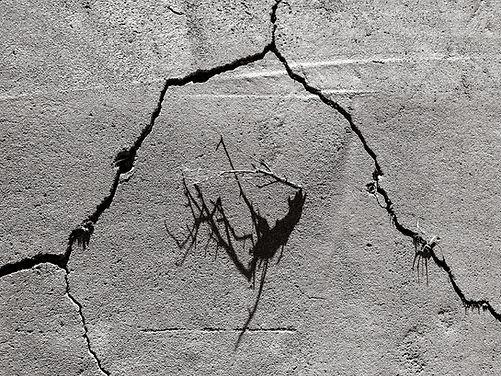Foundation Cracks, Branch & Shadow.jpg