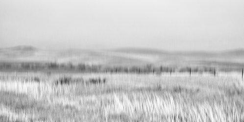 Field's of Custer