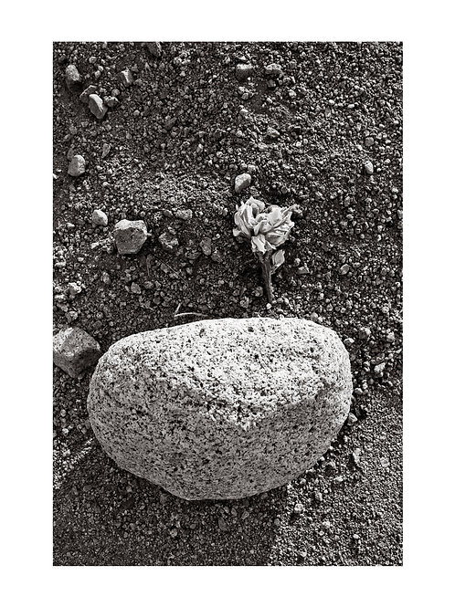 Flower and Granite Stone