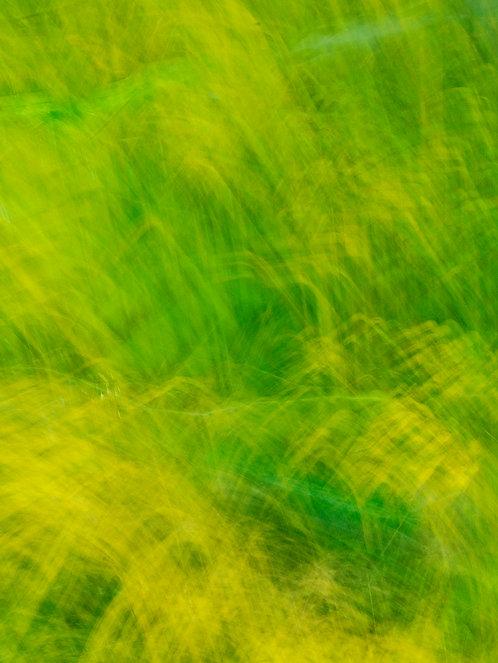 Natures Brushstrokes - Spring