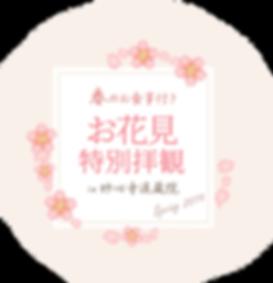 桜退蔵院.png
