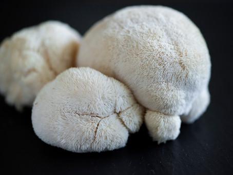 Guide to Medicinal Mushrooms