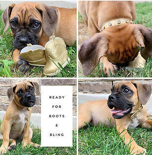 Boots and Bling Puppy Photos.jpg