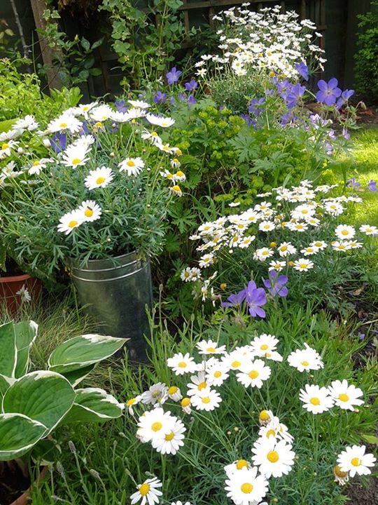 Giles Garden