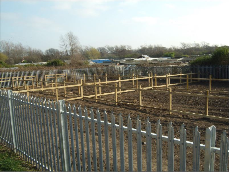 ss allotment wallsend 6.JPG