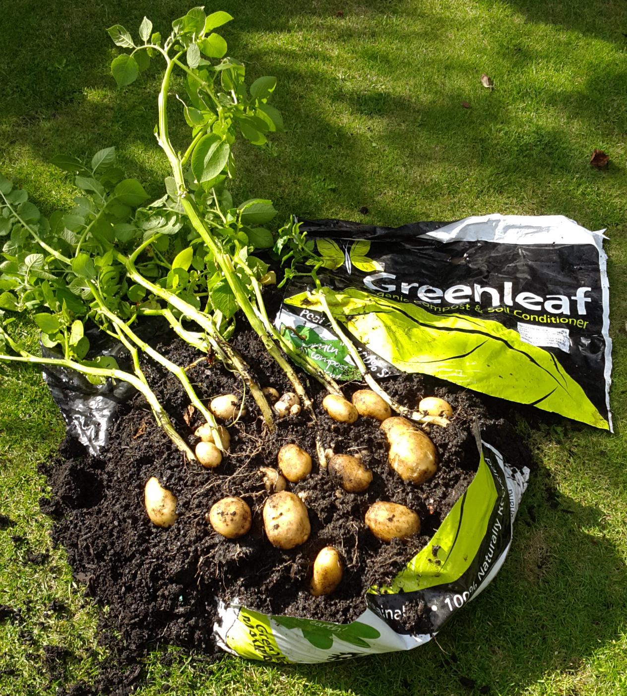 Potatoes GL Bag