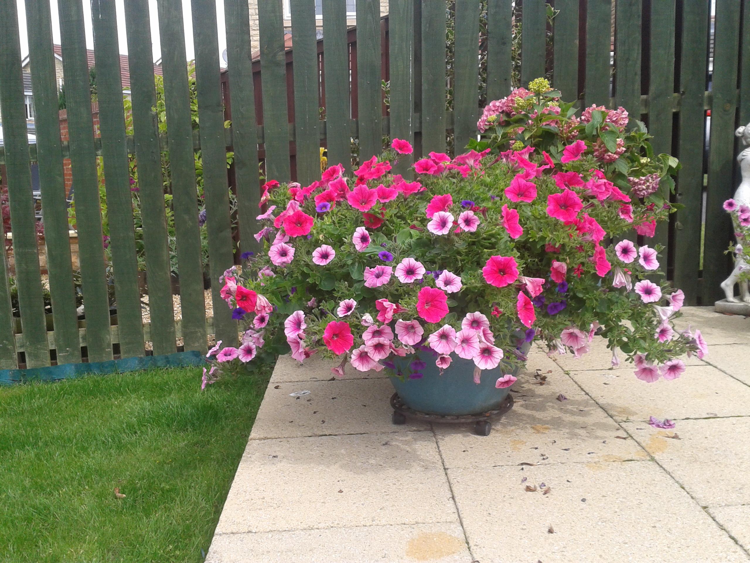 Jean- Flowers using Greenleaf