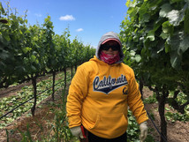 Show 13: Immigrant Labor Shortages and the Wine We Love