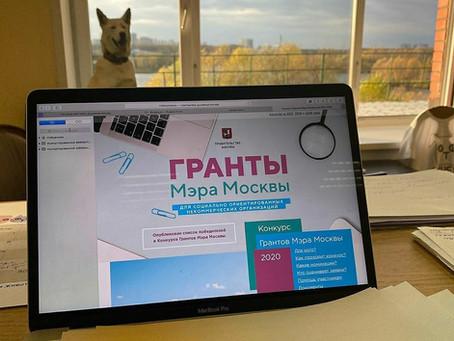 Фонд «Котодетки» выиграл грант Мэра Москвы