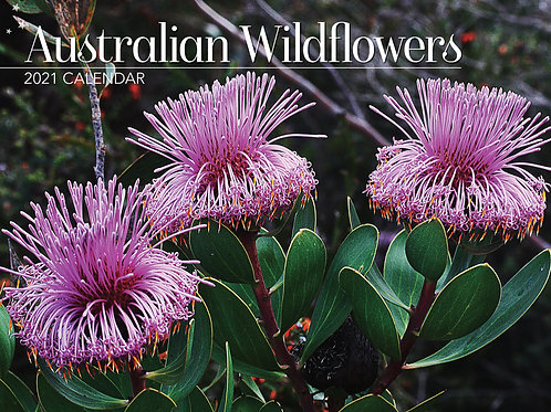 CALENDAR 2021 340X242MM AUSTRALIAN WILDFLOWERS