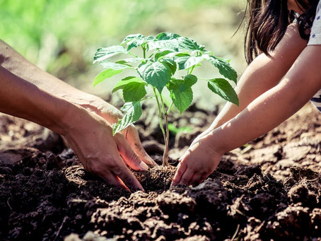 Writing Task 2 Revision – Sample Essay on Planting Trees in Big Cities