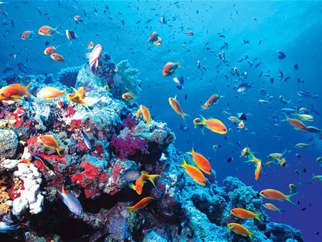 Vocabulary Builder Exercise – The Role of Gender Parity in the Fight to Save Oceans