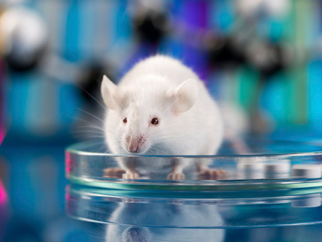 Writing Task 2 Revision – Sample Essay Topics on Animal Testing