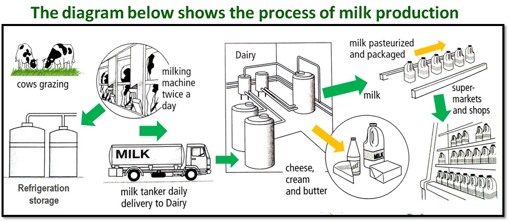 The Process Of Milk Production Sample Writing Task 1 Essay