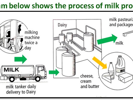 The Process of Milk Production - Sample Writing Task 1 Essay