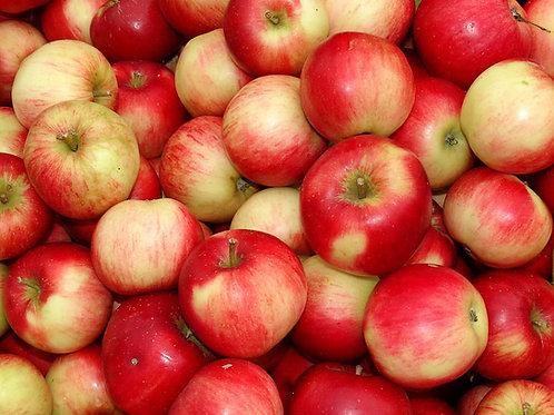 Honey Crisp - Apples