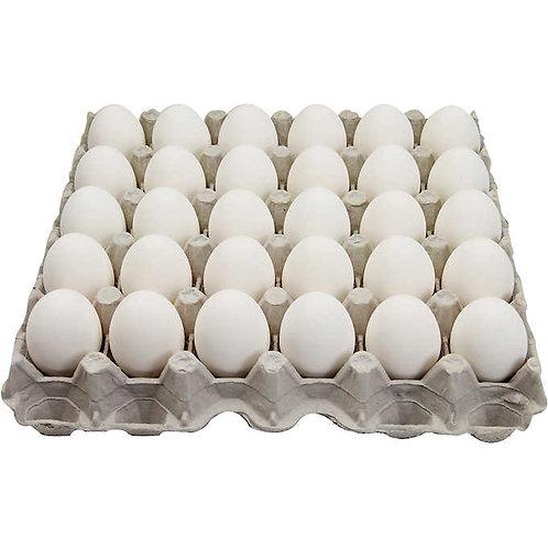 Large White Eggs - Flats
