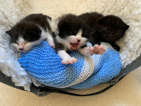 How These Kittens Went From Plastic Bag to Roundwood Vets