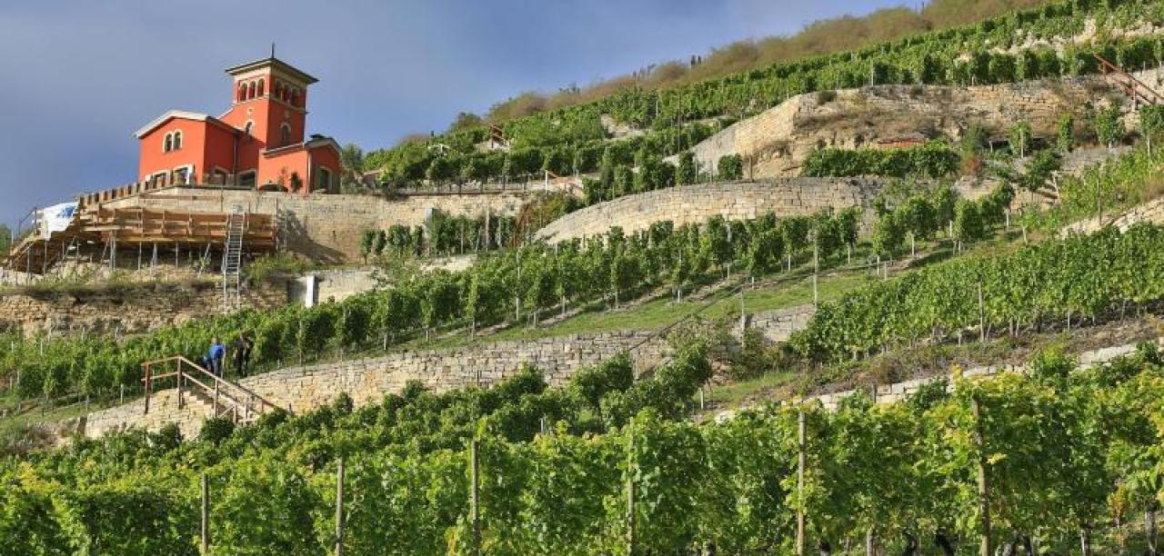 Wein in Katalonien