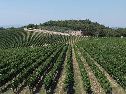 Von Südtirol nach Sizilien - Italienische Weine 16.03.2021