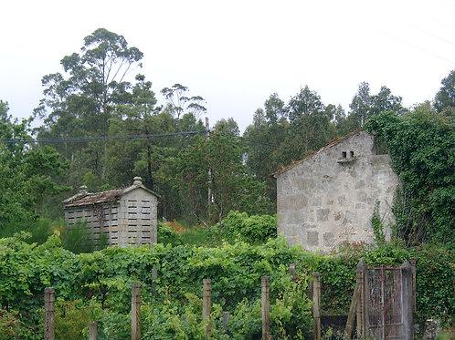 Von Galizien bis zum Balkan mit Wein & Käse 26.02.2021