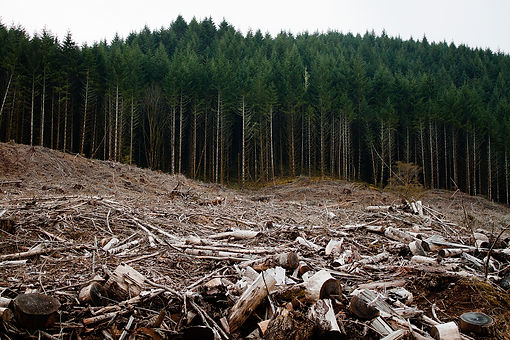 Clearcutting-Oregon.jpg