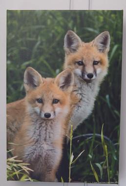 Fox Pair