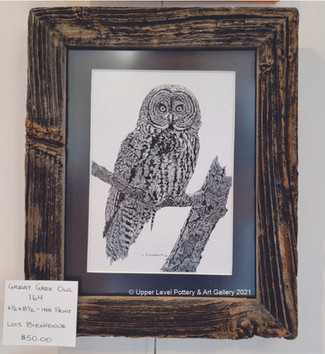 Great Grey Owl 164