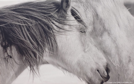 Horses - Sold