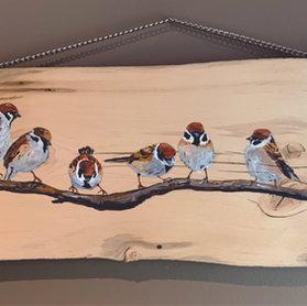 Rustic Sparrows