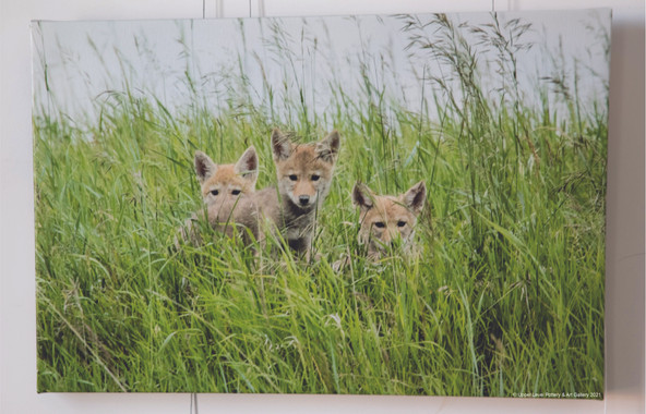 Coyote Triplets