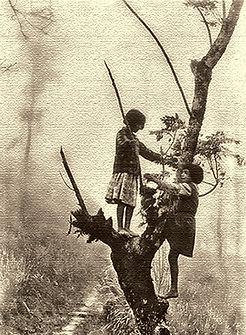 Treegirls.jpg